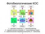 2014_10_30_010_photobio_purification_05.jpg
